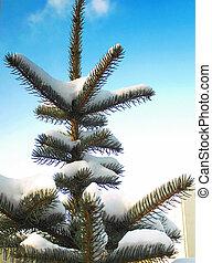 árvore, céu, neve