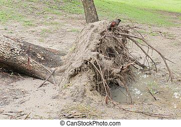 árvore caída, após, tempestade