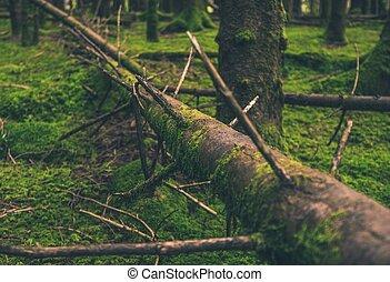 árvore caída, em, a, floresta