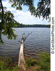 árvore caída, em, selva, lago