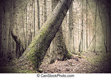 árvore caída, em, spooky, floresta