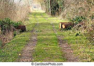 árvore caída, estrada