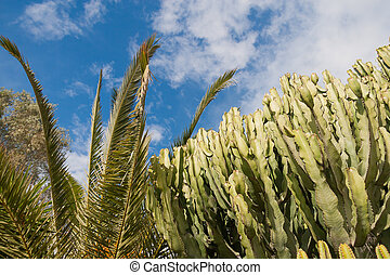 árvore cactus, em, verão