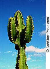 árvore cactus