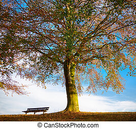 árvore carvalho, com, banco, em, outono