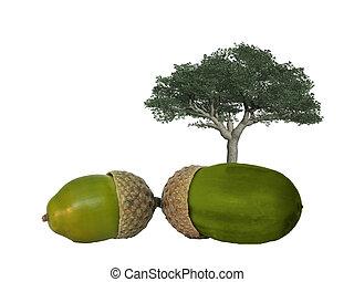 árvore carvalho, com, bolotas