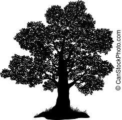 árvore carvalho, e, capim, silueta