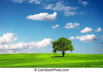 árvore carvalho, e, ecologia, paisagem