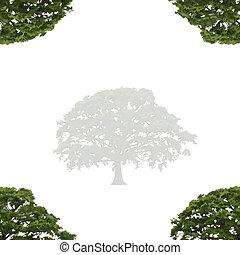 árvore carvalho, em, verão, abstratos