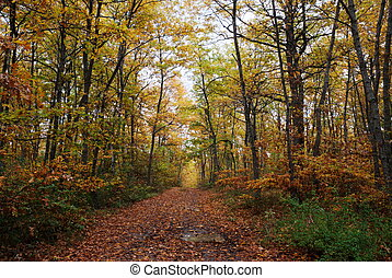 árvore carvalho, floresta
