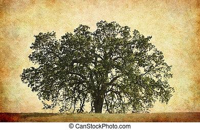 árvore carvalho, fundo, textured