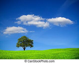 árvore carvalho, ligado, campo verde