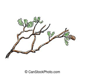 árvore, carvalho, ramo