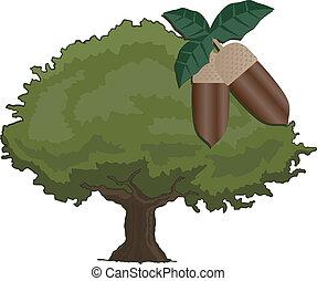 árvore, carvalho
