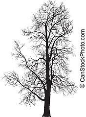 árvore castanha