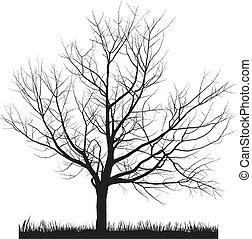 árvore cereja, em, inverno