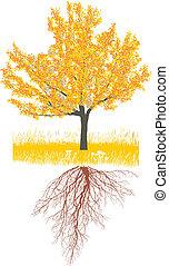 árvore cereja, em, outono, com, raizes