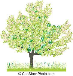 árvore cereja, em, primavera