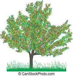 árvore cereja, em, verão