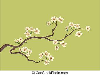 árvore cereja, japoneses