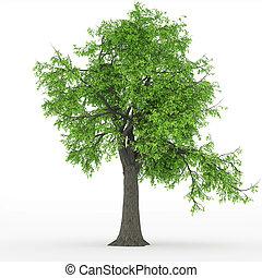 árvore cinza