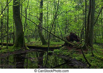árvore cinza, floresta, fluxo