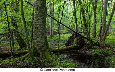 árvore cinza, por, floresta, fluxo