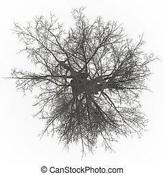 árvore cinza, topo, leafless