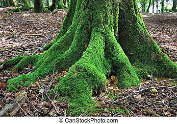 árvore, coberto, com, musgo