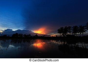 árvore coco, em, pôr do sol, experiência.