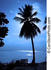 árvore coco, silhoue