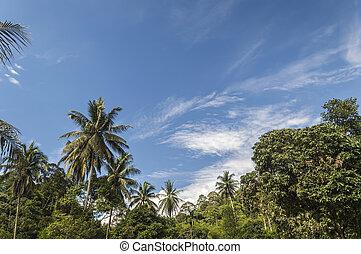 árvore coco, sob, a, céus azuis