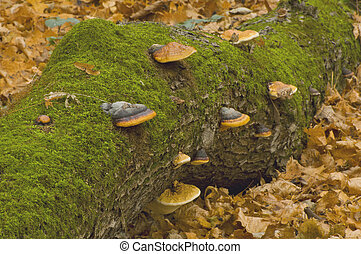 árvore, com, cogumelos