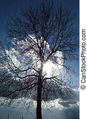 árvore, com, luz