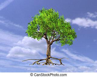 árvore, com, raizes