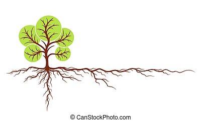 árvore, com, roots.