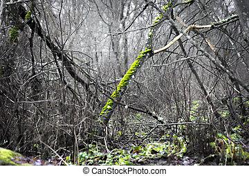 árvore, com, verde, fungo