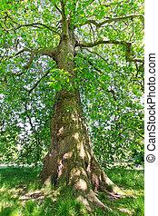 árvore decídua
