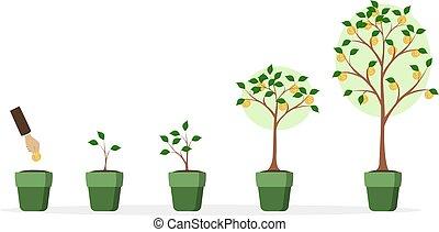 árvore dinheiro, growth.