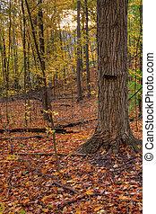 árvore, e, outono, sol
