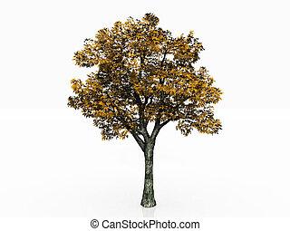 árvore, em, a, outono