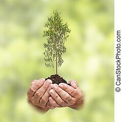 árvore, em, mãos