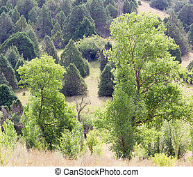 árvore, em, natureza