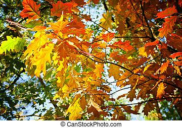 árvore, em, outono