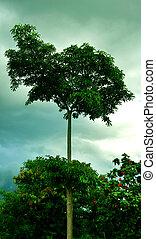 árvore, em, parque verde