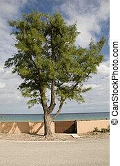 árvore, em, praia