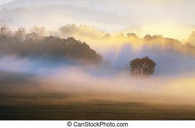 árvore, em, raio sol, névoa
