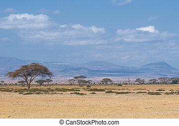 árvore, em, savannah, típico, africano, paisagem