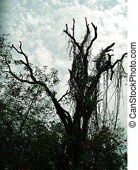 árvore estéril
