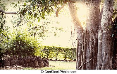 árvore figo